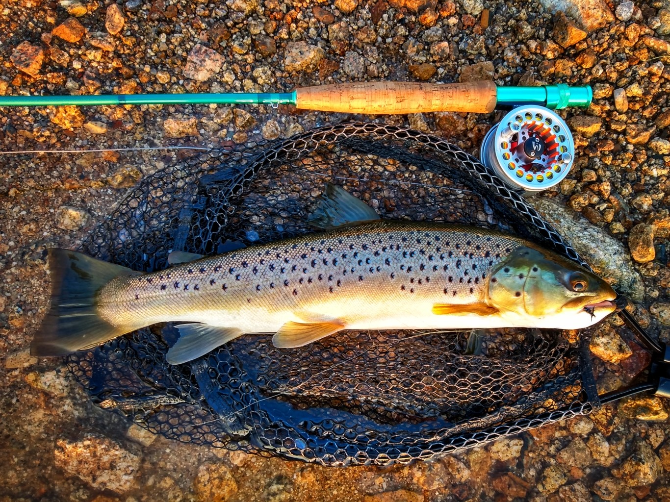 Lake Trout Put /& Take Wooly Bugger Streamer # 8 Bach-Rainbow-Sea-Pond 3 St