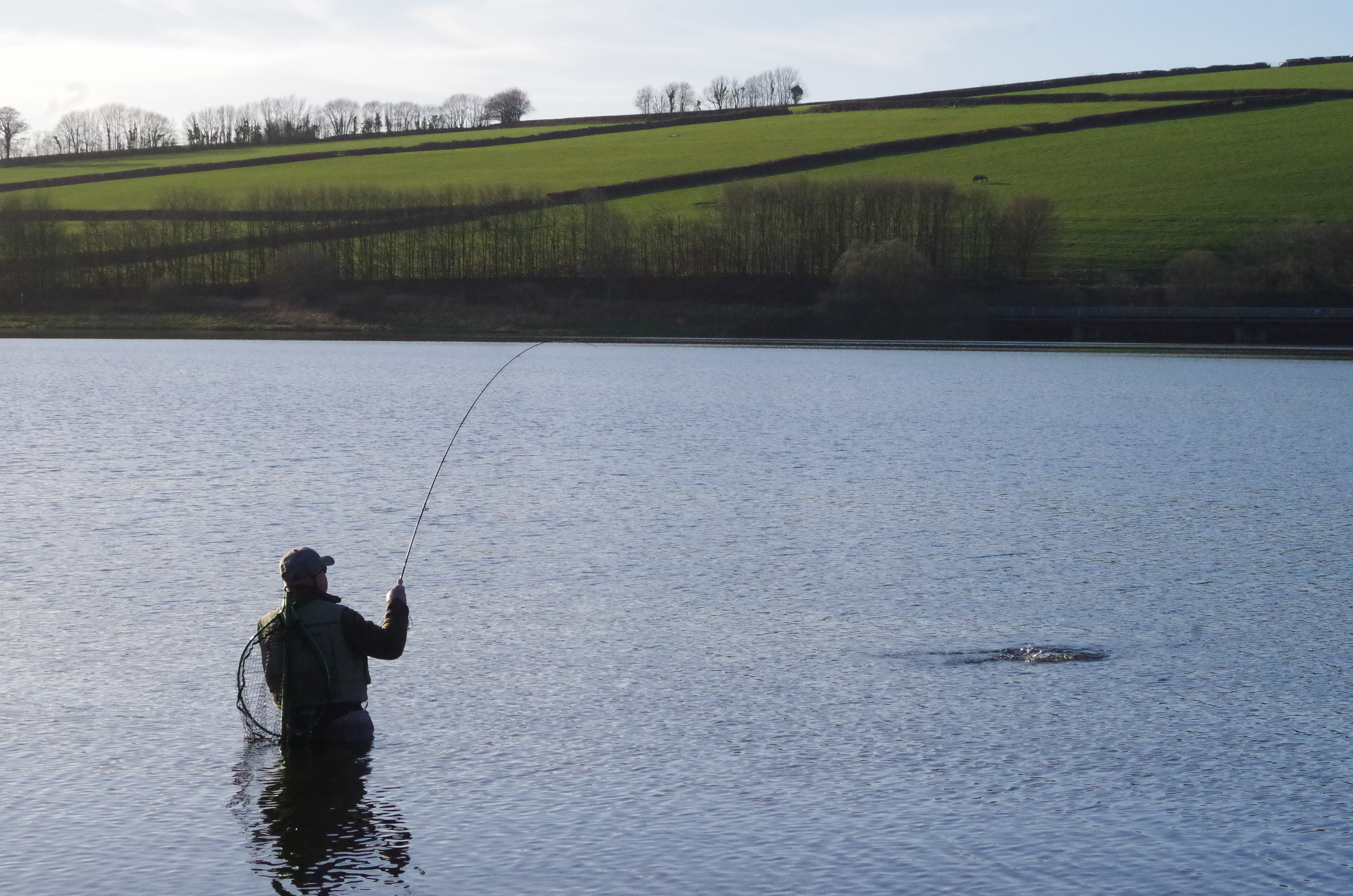 a9caf365 (Above)A hard fighting rainbow on the line at Wimbleball. Exe Valley Fishery,  Fly - Fishing ...