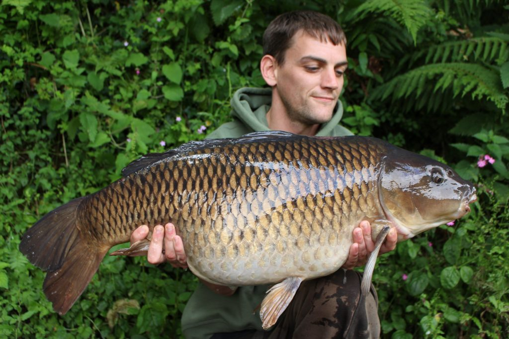 Chris Connaughton had a cracking days fishing last week at Jennetts reservoir, Bideford. Chris Banked this clonking 28.00 common, part of a 6 fish catch on the day ticket venue. Chris also had another fish over 20lb at 21.04. Fishing tight to the far marginal trees (a prolific hot spot) worked for Chris.