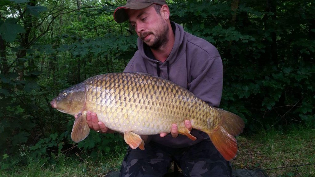 Scott Vern who had 7 fish out up to 15lb from lodge lake using mainline cell boilies .